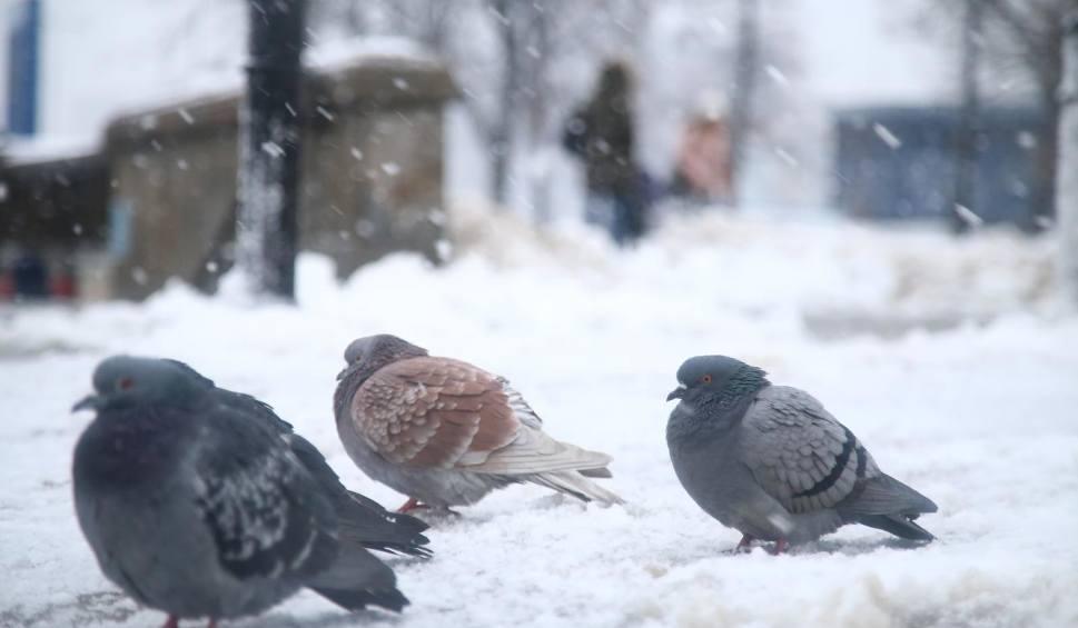 Film do artykułu: Województwo podlaskie. Minionej nocy w Suwałkach było -16 °C. Prognoza pogody na piątek 23.02.2018 (wideo)