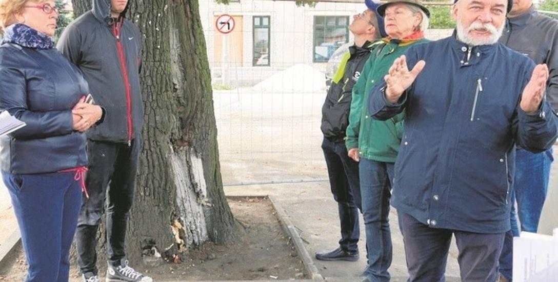 Stefan Gawroński (po prawej) zapewnia, że dąb jest chory i żadne zabiegi pielęgnacyjne nie są w stanie mu pomóc