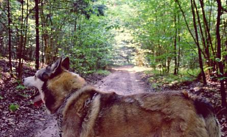 A teraz podamy kilka propozycji, gdzie można wybrać się na spacer z całą rodziną, lub czworonogiemRezerwat AntoniukRezerwat przyrody położony na terenie