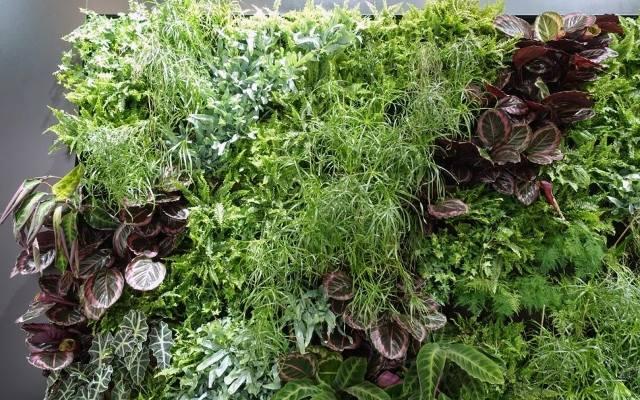 Na tzw. zielonych ścianach rośliny sadzi się na specjalnych matach, które nie tylko podtrzymują rośliny, ale jednocześnie zapobiegają zawilgoceniu ś
