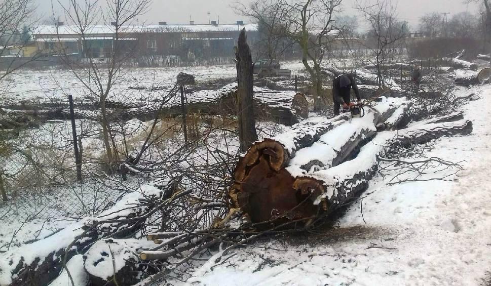 Film do artykułu: Zabytkowa alejka orzechów kaukaskich w Zbydniowie przestała istnieć