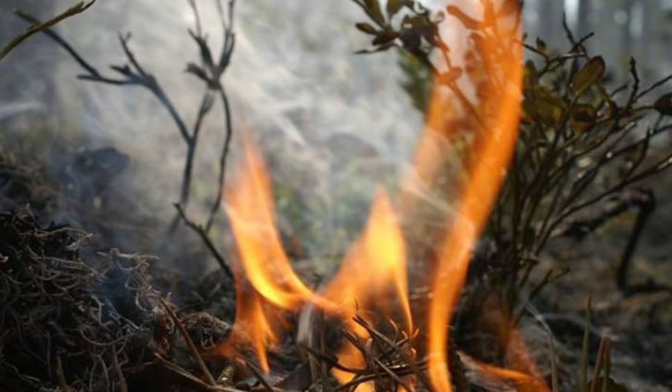 Pożar Lasu Ogień Strawił Pół Hektara Leśnicy Podejrzewają