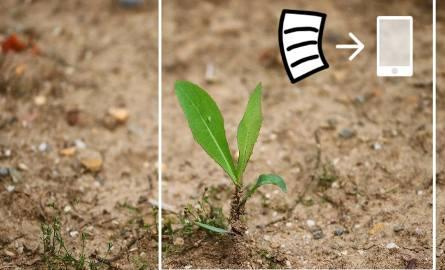 Od 2020 roku nie ma papierowych wniosków o pomoc po suszy. Ta zmiana była zapowiadana od kilku miesięcy i teraz weszła w życie. Do złożenia wniosku o