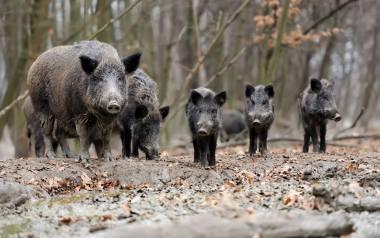 Nowe przepisy przewidują  kary dla tych, którzy będą przeszkadzać myśliwym w polowaniach.