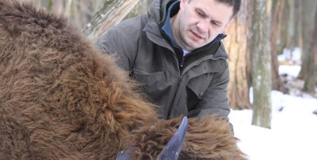 Dr hab. Rafał Kowalczyk od lat zajmuje się badaniem populacji żubrów; był członkiem Państwowej Rady Ochrony Przyrody.