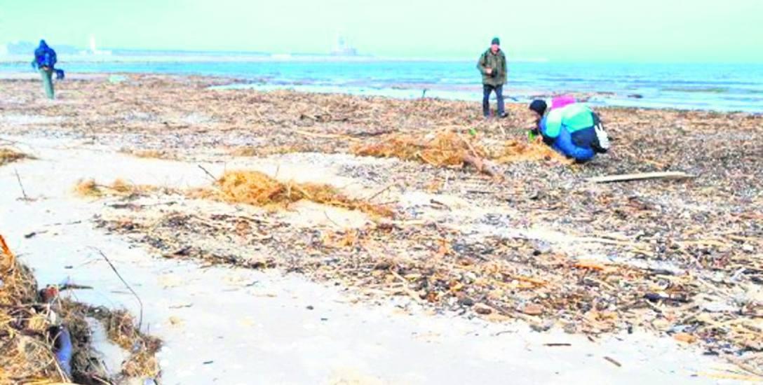Niektórzy dopatrują się też pozytywów w tym, że na plaży pojawiło się pełno odpadów morskich. To różnego rodzaju zbieracze i poszukiwacze kawałków drewna,