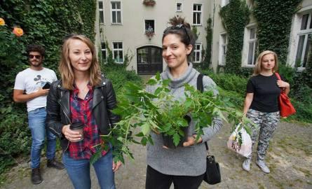 Na jednym z łazarskich podwórek, przy ul. Matejki 46 w środę po południu są rozdawane sadzonki pomidorków koktajlowych. Sadzonki przygotowali mieszkańcy