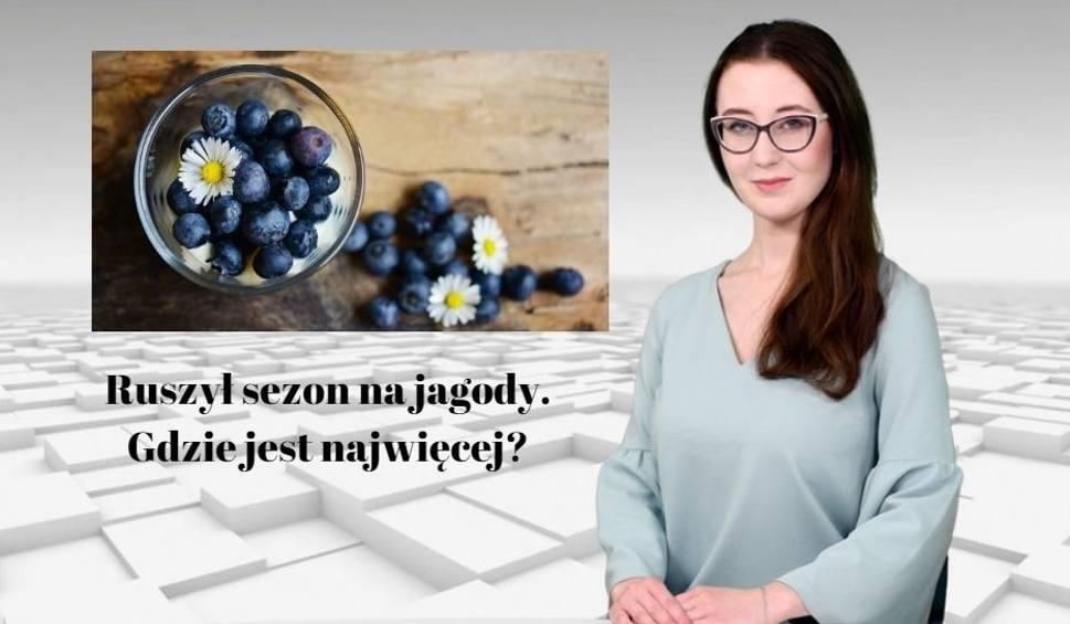 Film do artykułu: Ruszył sezon na jagody. Gdzie jest najwięcej? WIADOMOŚCI