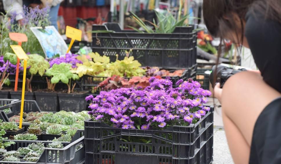 Film do artykułu: Jarmark ogrodniczy przed teatrem. Dla wytrawnych ogrodników i początkujących [ZDJĘCIA]