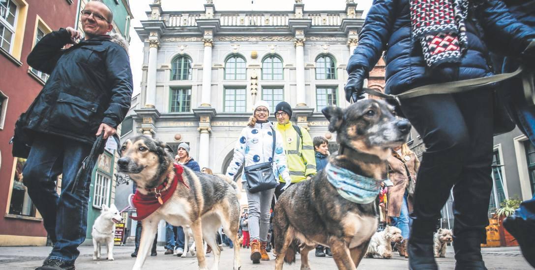Schroniska organizują akcje, propagujące adopcje zwierzą. W Gdańsku wolontariusze i psy spacerowali ostatnio po starówce