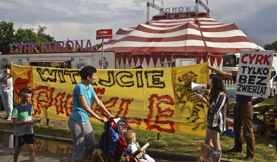 """Film do artykułu: Protest pod cyrkiem. """"Zwierzęta nie są w cyrku z własnej woli!"""""""