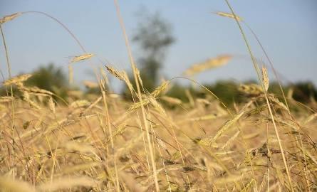Aplikacja do zgłaszania strat suszowych. Jak system policzy, ile Ci się należy?