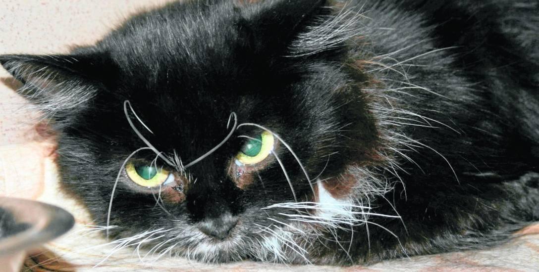 Inspektorzy w zagraconym mieszkaniu  złapali cztery koty, które trafiły do krakowskiego schroniska