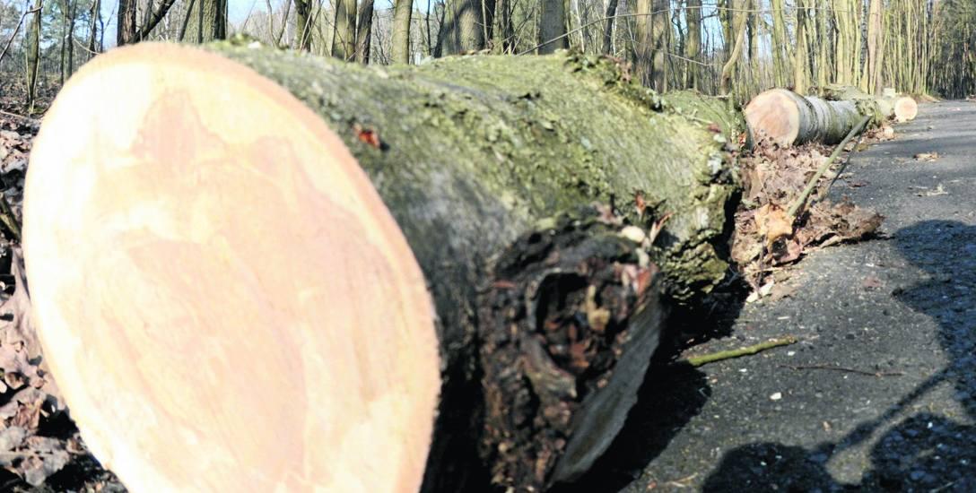 Pod budowę ścieżki w rowerowej, prowadzącej od ul. Botanicznej do Zielonej Góry Ochli, wycięto sporej wielkości drzewa