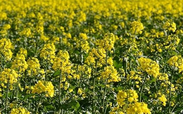 Unia ogranicza, a rolnik martwi się o ochronę roślin