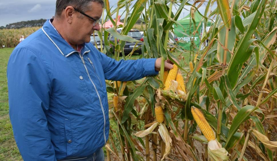 Film do artykułu: Kukurydza - ważna roślina dla opolskich rolników