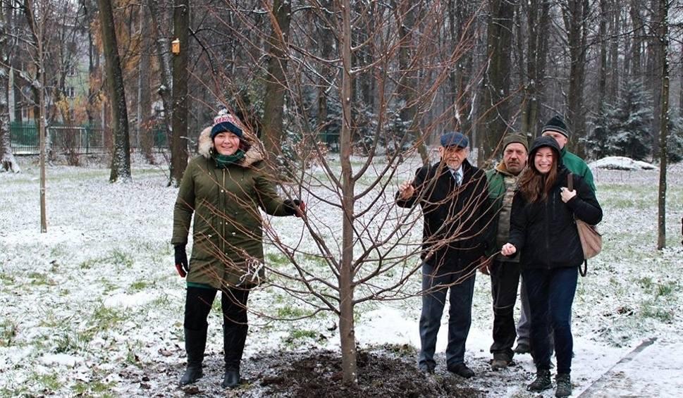 Film do artykułu: Żywiec: Trwa nasadzanie nowych drzew w Parku Habsburgów. Drzewa powaliła tegoroczna wichura