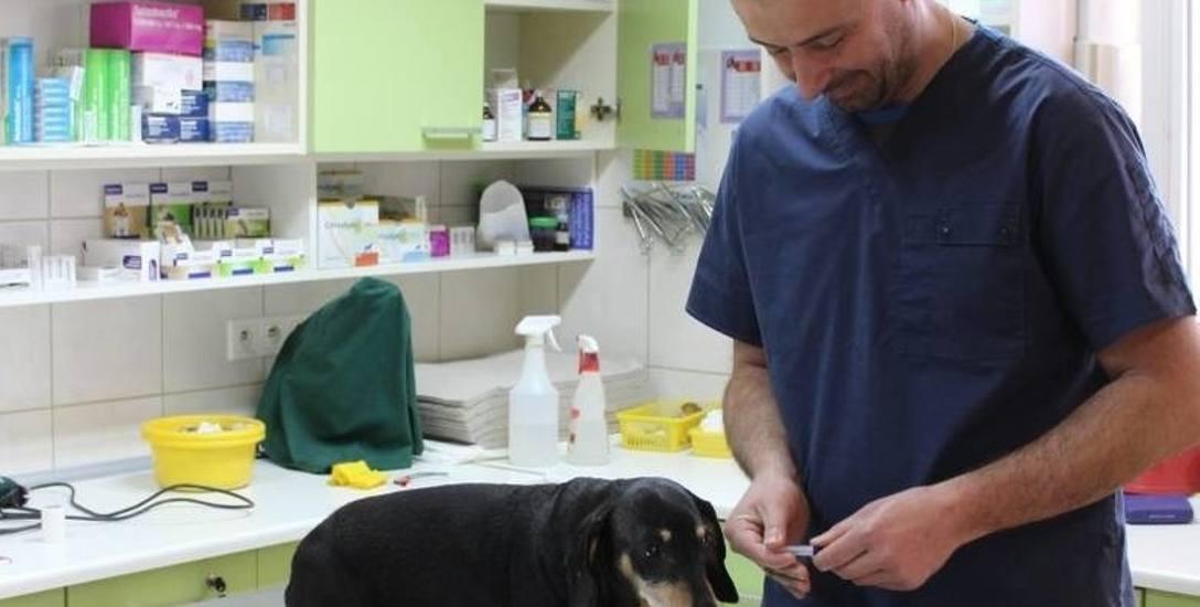 Koalicja Obywatelska chce obowiązkowego chipowania psów. To dobry pomysł?