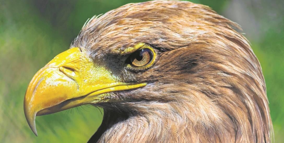 Polacy żegnają się z orłem, rakiem rzecznym i żbikiem