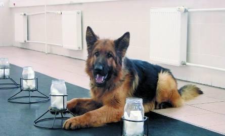 Michu, pogodny i posłuszny pies. I z perfekcyjnym węchem!