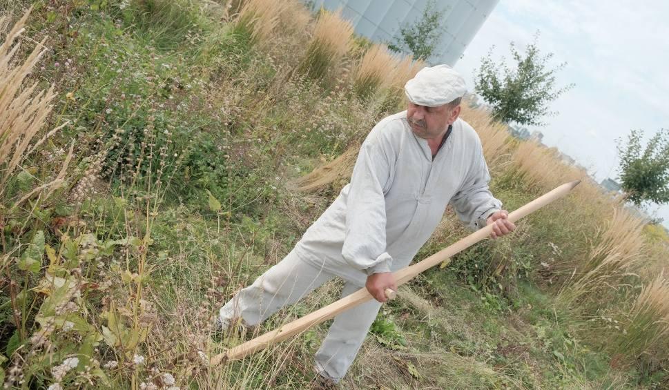 Film do artykułu: Sianokosy w CSK w Lublinie. Skosili trawy i zioła na dachu gmachu w centrum miasta. Zobacz zdjęcia i wideo