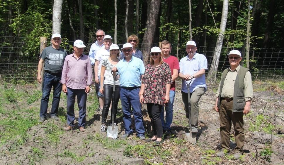 Film do artykułu: Gmina Iłża. W Marculach pracownicy Starostwa Powiatowego w Radomiu posadzili ponad tysiąc sadzonek dębów szypułkowych