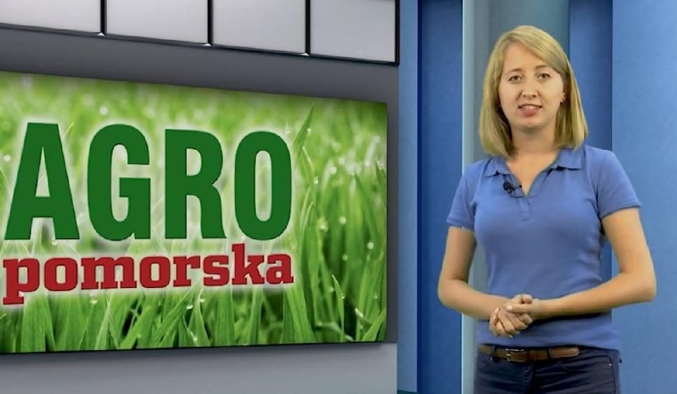 Film do artykułu: Program Agro Pomorska odcinek 33 m.in. o Planie dla Wsi [wideo]