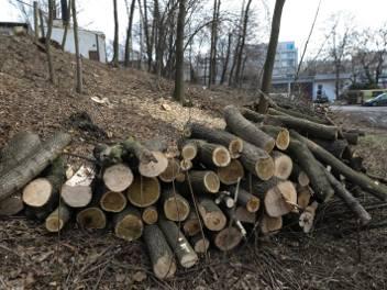 Przy ulicy Wrocławskiej wycięto 44 drzewa. Według mieszkańców, wyglądały na zdrowe, ale tak nie było