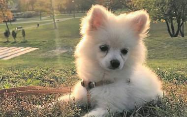 Wiele kont w mediach społecznościowych zawierających zdjęcia psów czy kotów zyskuje szybko wielkie grono obserwujących. Tego psa ze zdjęcia (imię Atreus)