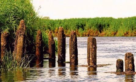 Z dna rzeki Biebrzy wyrósł... szwedzki most