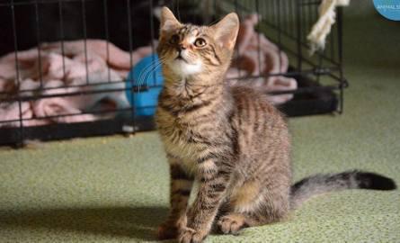 W galerii koty czekające na adopcję →