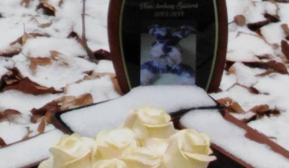 Film do artykułu: Słubice: Nielegalny cmentarz dla zwierząt ma być zlikwidowany. Urzędnicy apelują do właścicieli padłych zwierząt o ich przeniesienie