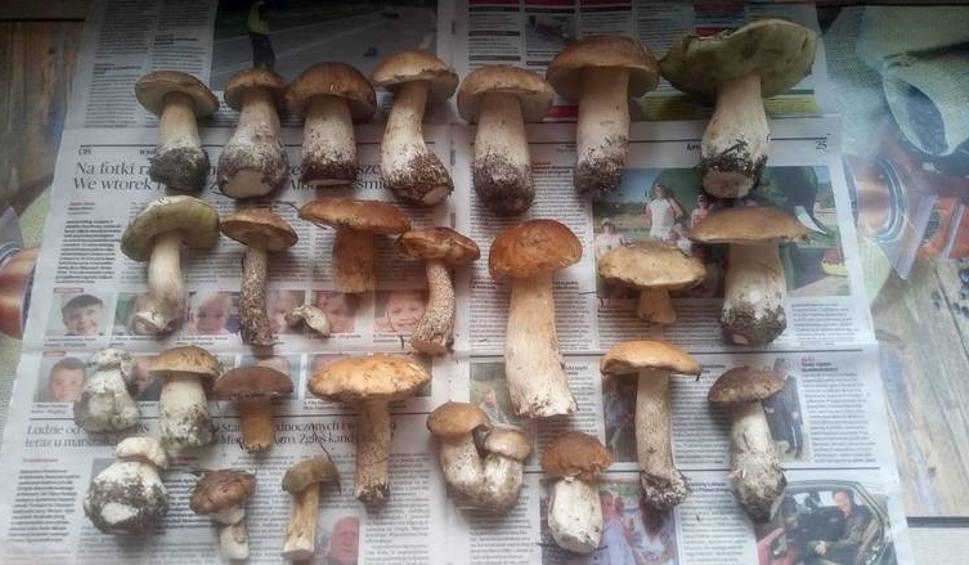 Film do artykułu: Wielki wysyp grzybów. Gdzie znaleźć najpiękniejsze okazy? [ZDJĘCIA]