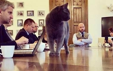 Kot Boniek mieszka w biurach OPS-u w Skwierzynie. A Wrocek - w pomieszczeniach wrocławskiego urzędu, gdzie urzęduje z prezydentem miasta Jackiem Sut