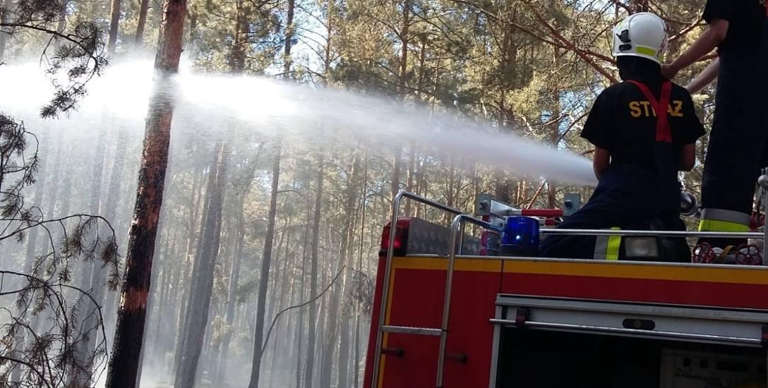 """130 ha lasu paliło się 26 i 27 czerwca, w największe upały. """"Wyjazd nr 53. Czwartek, 27.06.2019, godz. 12:05. Okolice m. Wiesenau i Ziltendorf, powiat"""