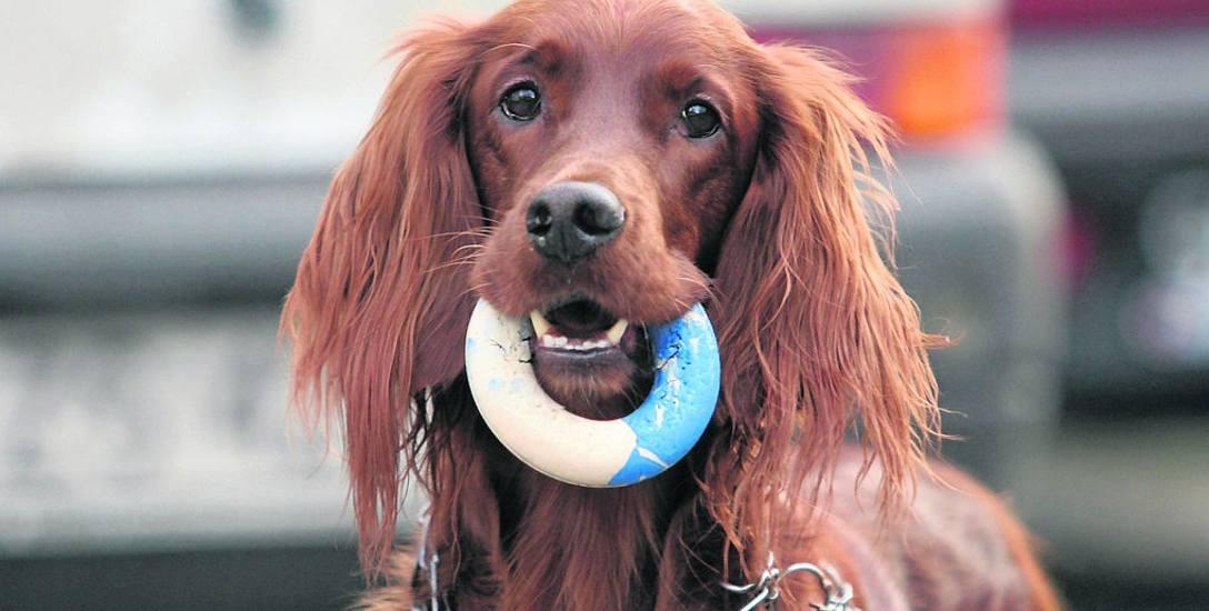 Każdy pies ma inną osobowość i nawyki, już po kilku wizytach lekarz jest w stanie poznać te cechy