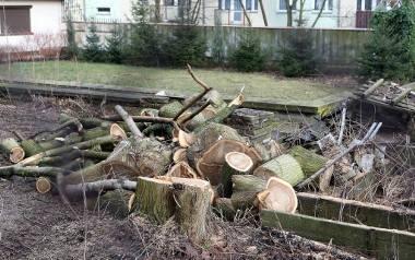 Drzewa rosną długo. Decyzje o wycięciu zapadają szybko