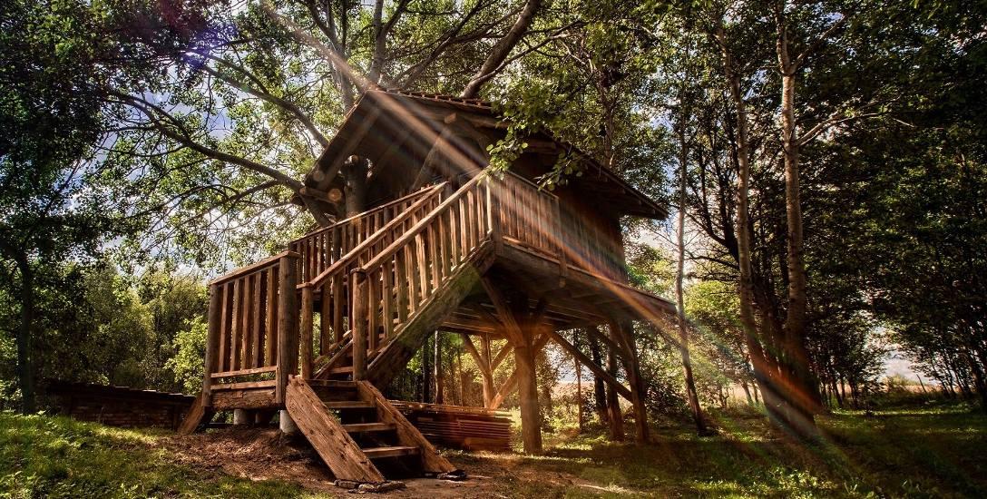 W domu na drzewie znajdziesz święty spokój. To jedyny taki dom na Podkarpaciu, powstał w Pstrągowej