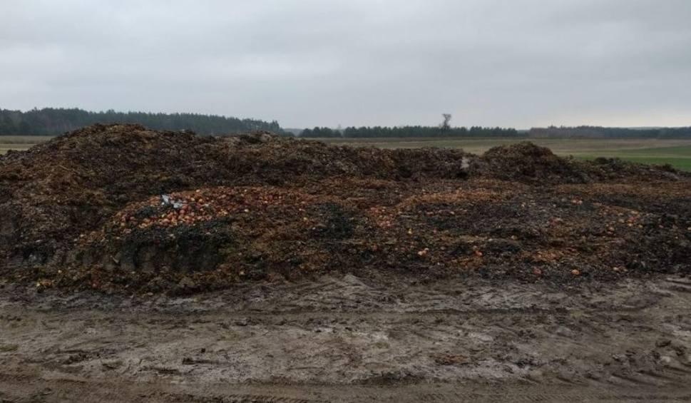 Film do artykułu: Śmieci zakopane na działce w gminie Raków. Dwie osoby z zarzutami