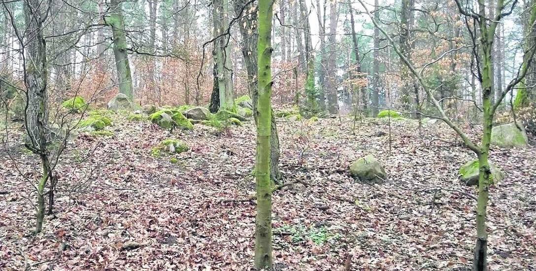 Przybyła: - W lesie trzeba zrobić skanowanie laserowe. Wówczas korony drzew stają się jakby przezroczyste.  Nauczyłem się wykonywać obrazowania numeryczne