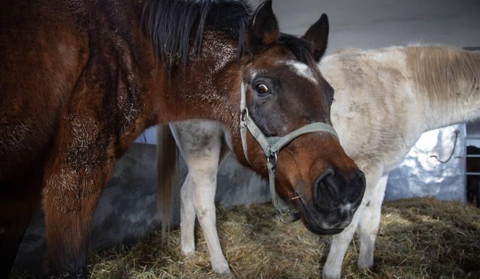 Film do artykułu: Konkurencyjna aukcja koni pod Krakowem?