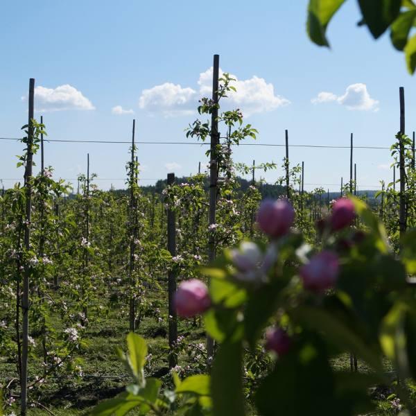 Zatory płatnicze głównym problemem producentów owoców