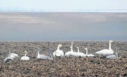 Ptaki przyleciały już do naszego regionu z miejsc zimowania