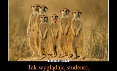 Dziś Dzień Studenta. Oto najlepsze memy o studentach. Zobacz!