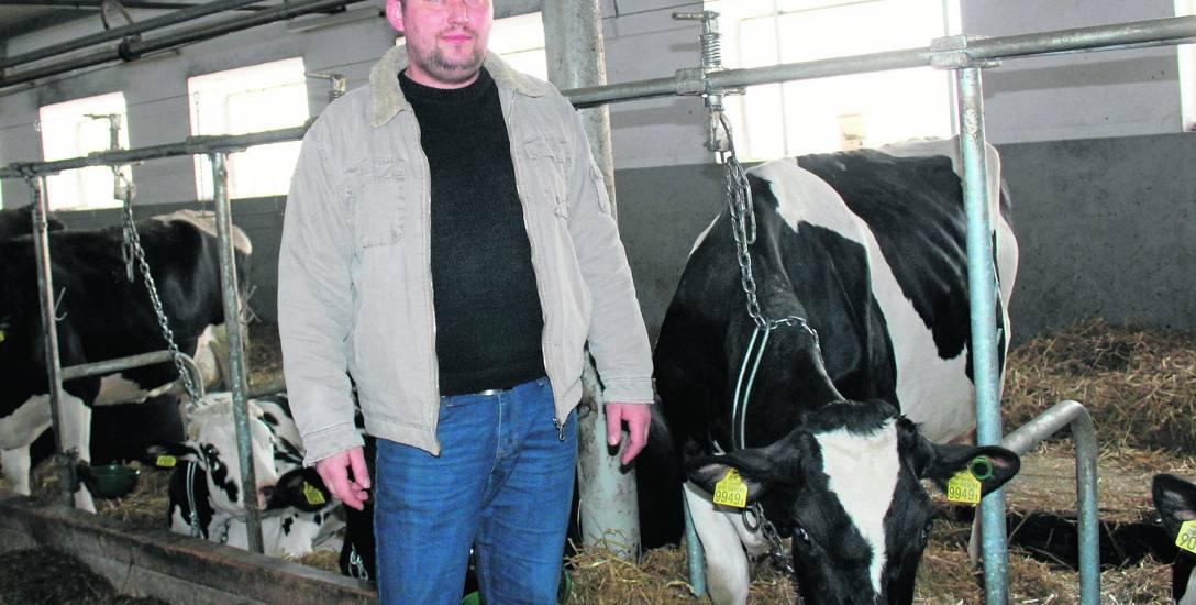 Kijewice. Mariusz Szelągowski zdrowie swoich krów sprawdza w... aplikacji mobilnej