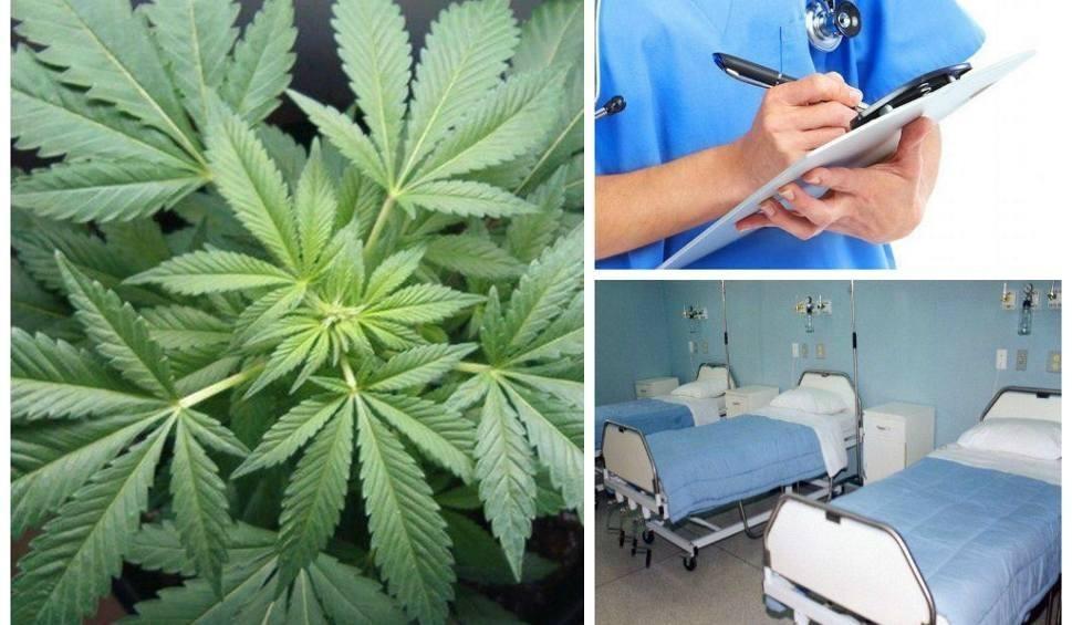Film do artykułu: W Bydgoszczy znów będą leczyć medyczną marihuaną