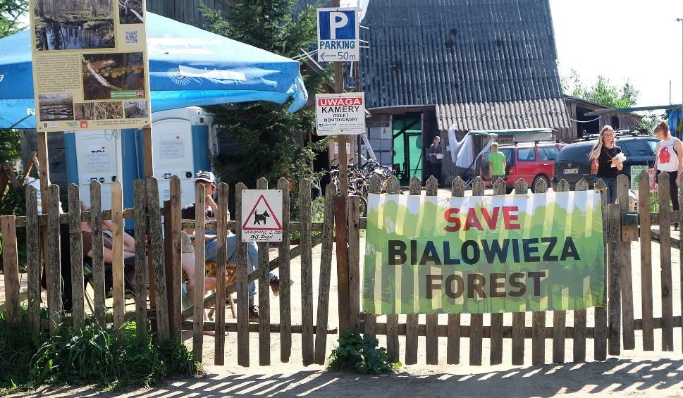 Film do artykułu: Puszcza Białowieska. W trzech miejscach zablokowali wycinkę