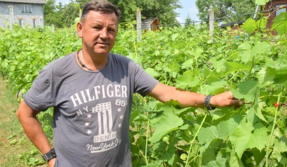 Film do artykułu: Niezwykłe tajemnice winnicy w Opatowie. W sobotę odbędzie się tu Noc Świętojańska (WIDEO, ZDJĘCIA)