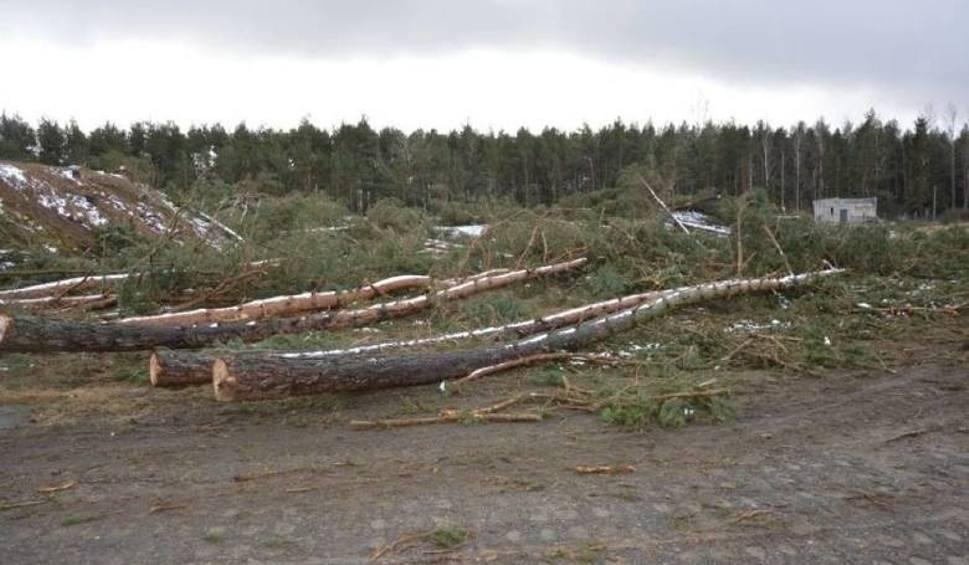 Film do artykułu: Mają zasadzić na swoich działkach w Łebie 18 tys. drzew, a kupili je żeby tam budować