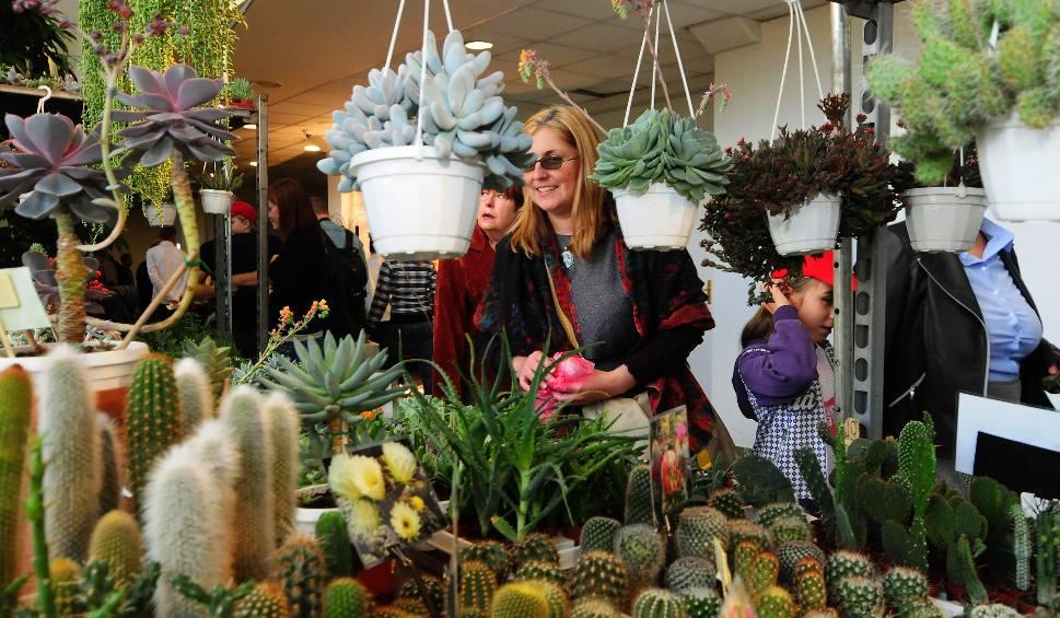 Film do artykułu: Egzotyczne rośliny i regionalne potrawy na 31. Jesiennym Kiermaszu Ogrodniczym